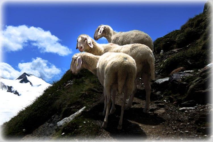 Ramolhaus-dag2-fårpåstig