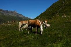 Rotmoostal--dag3-Häst