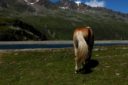 Rotmoostal--dag3-Häst1