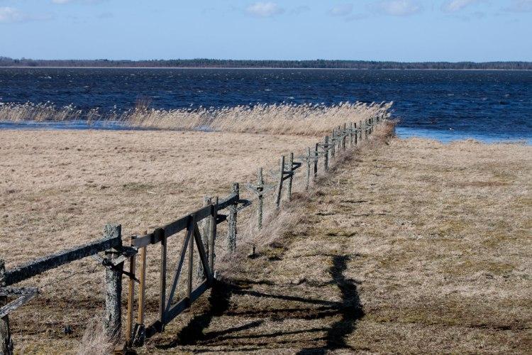 Hornborgasjön3