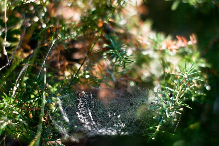Spindeliträdgård