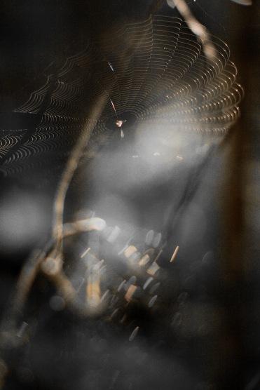 Spindelpåhunneberg1