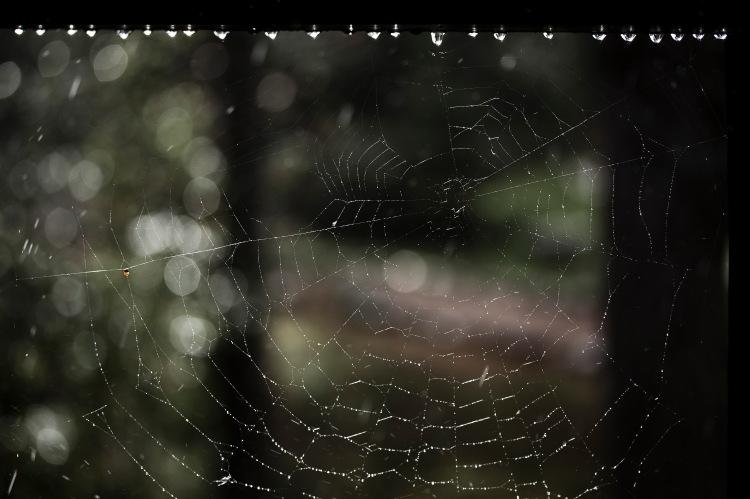 Spindelnätiregn